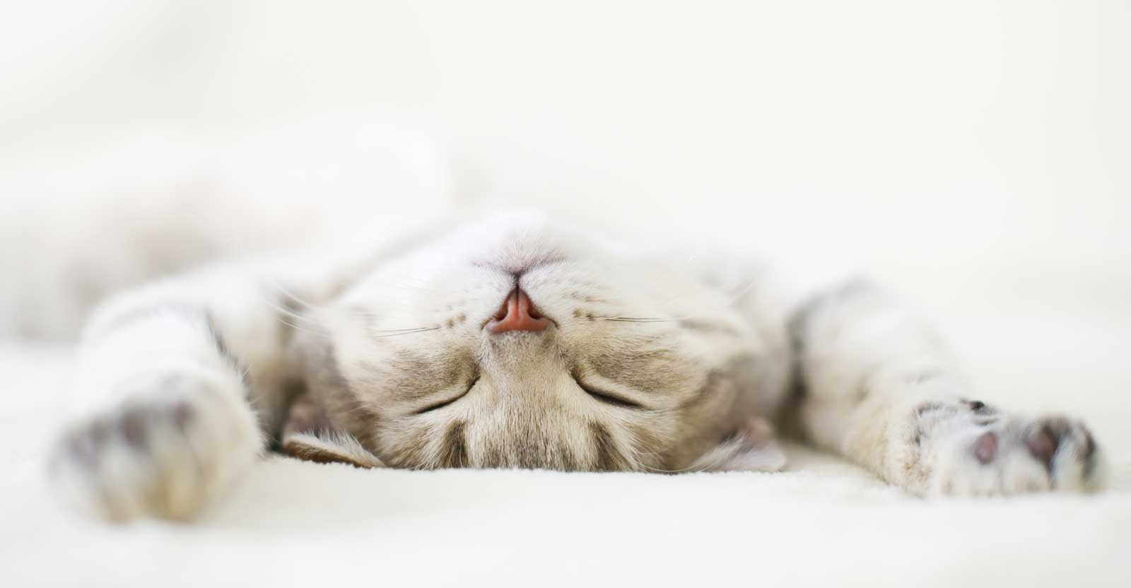 reiki healing for cats