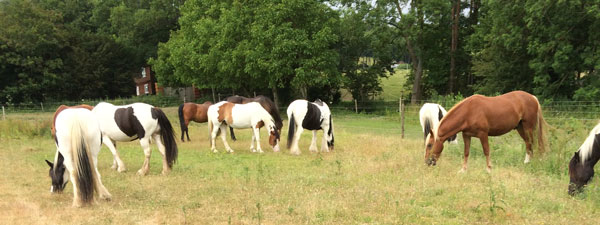 Rescued horses at Mane Chance