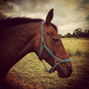 telepathic horse communication