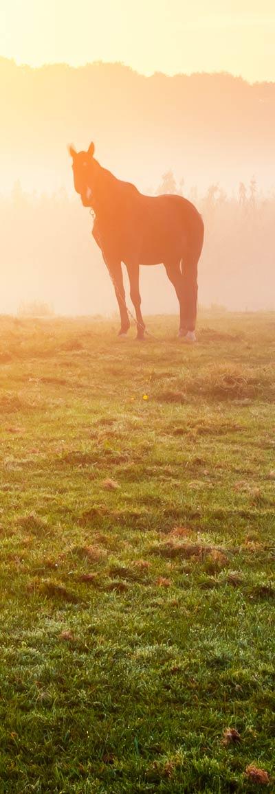 spirit horse in field