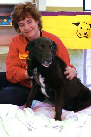animal shelter reiki session