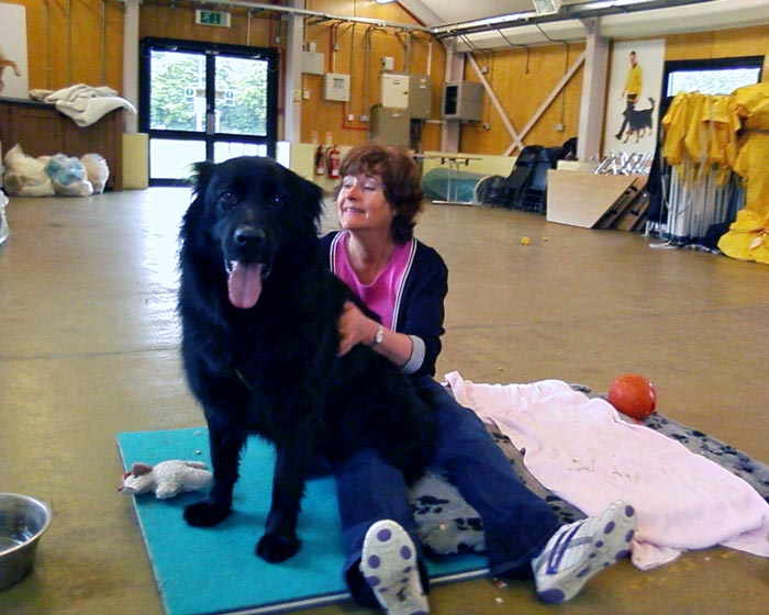 Frankie the dog receiving a reiki session