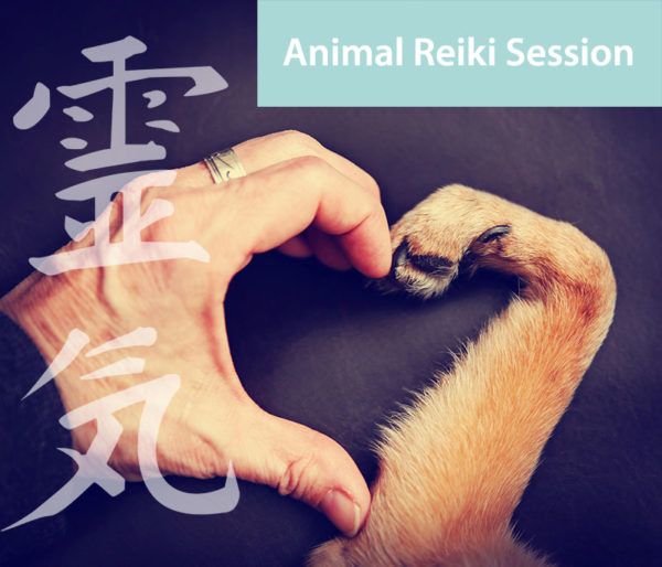 animal and pet reiki therapy session