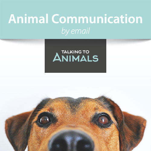 animal communication session by email