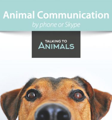 animal communication session by phone or skype