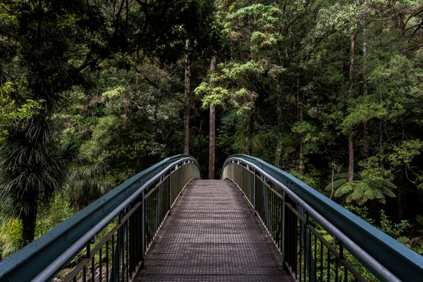 Bridge into a forest