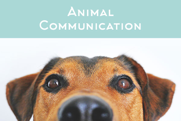 Animal Communication for pets