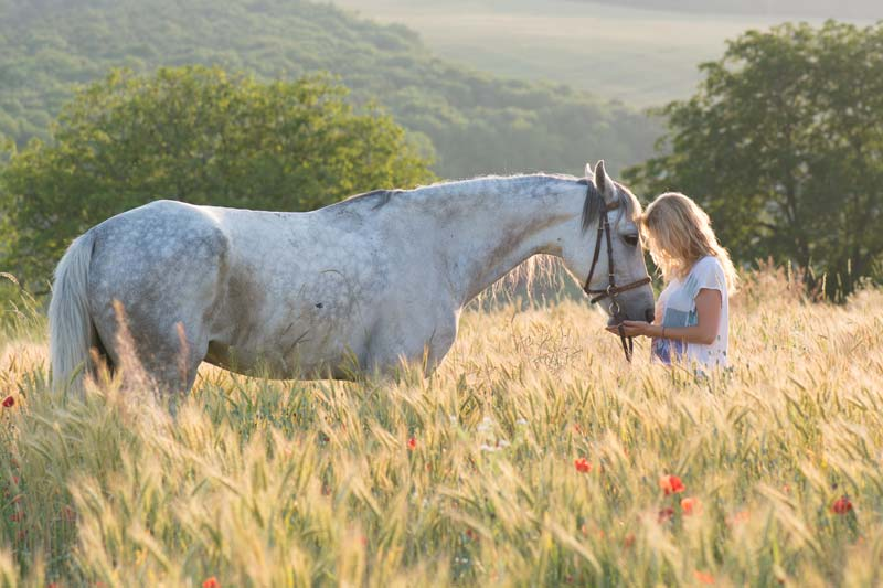 reiki sessions for horses