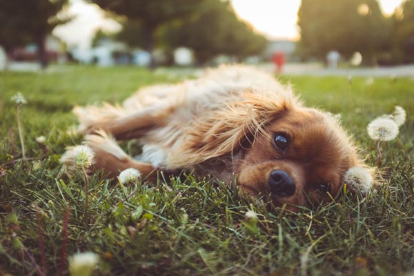 reiki healing for dogs