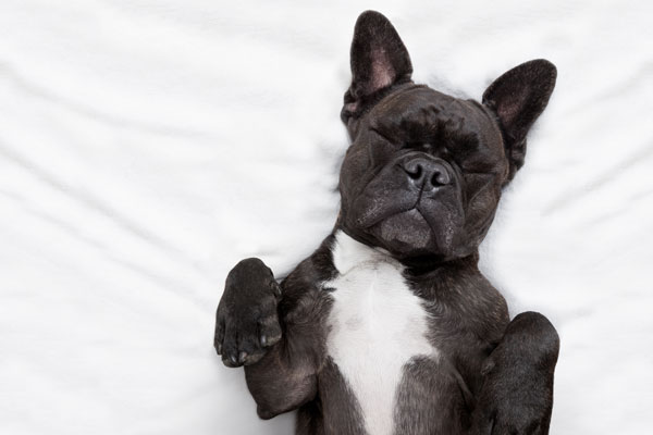 reiki on dogs for reducing anxiety