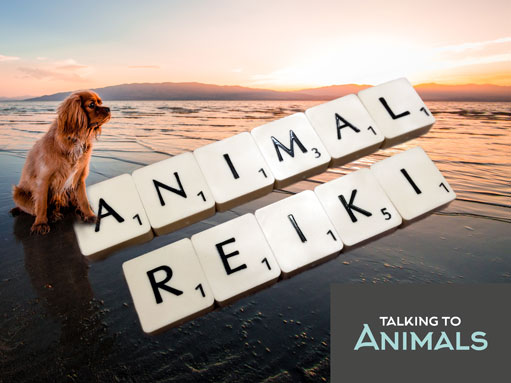 Animal Reiki for pets