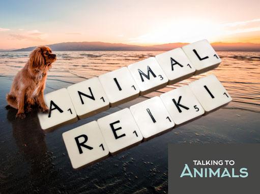 Animal Reiki for pets